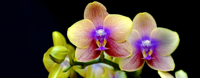 A Thousand and One Orchids 2018