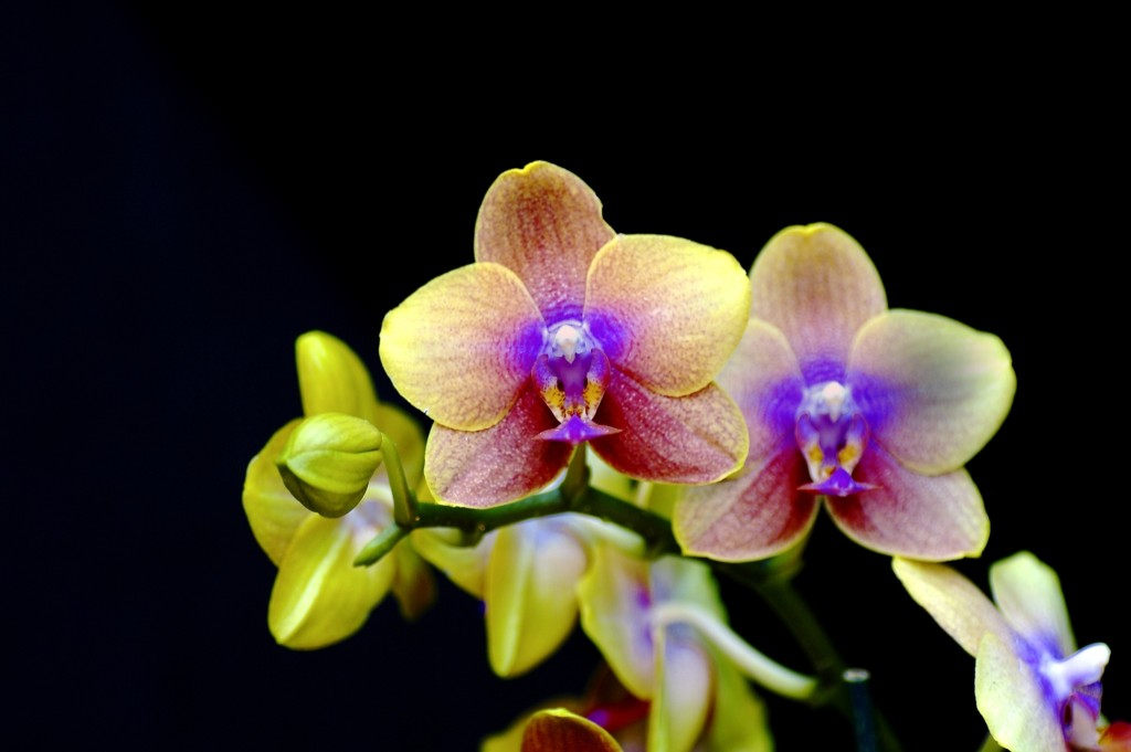 a thousand and one orchids exhibition at the jardin des plantes