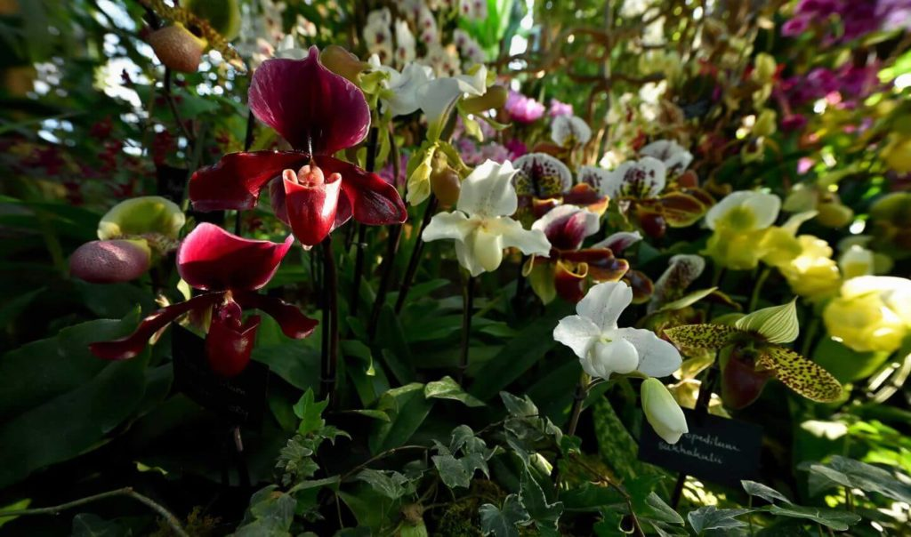 A Thousand and One Orchids © MNHN - F-G. Grandin